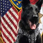 Putnam-County-Sheriff-K9-Lex-body-armour